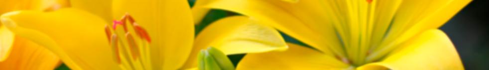 Lirio persa reproduccion asexual en