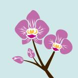 Orqu deas caracter sticas significados or genes y for Cuidado de las orquideas moradas